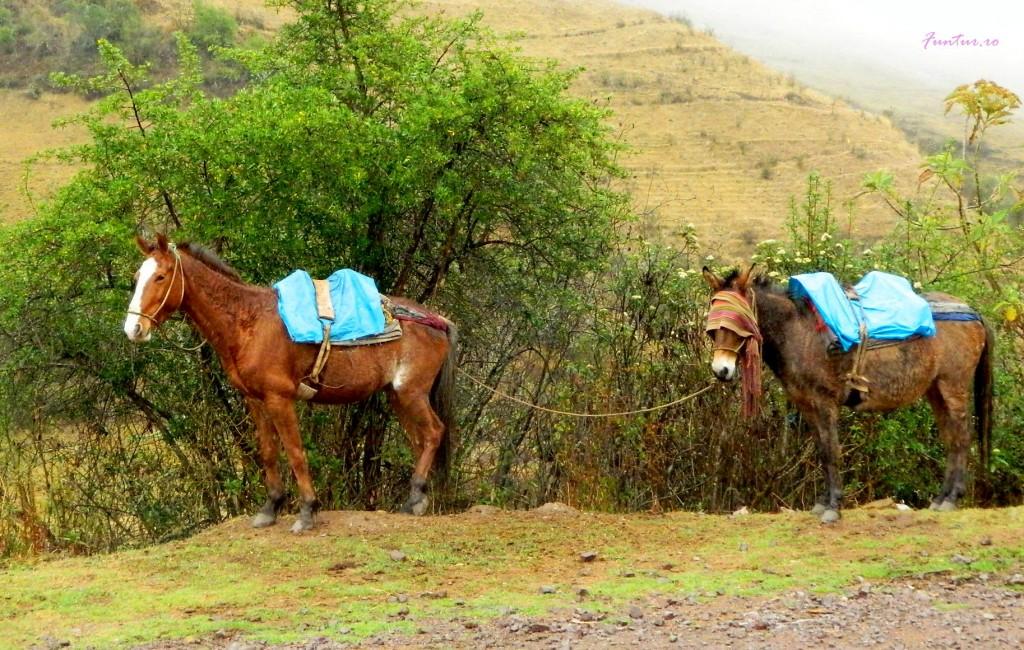 Caluti spre Machu Picchu