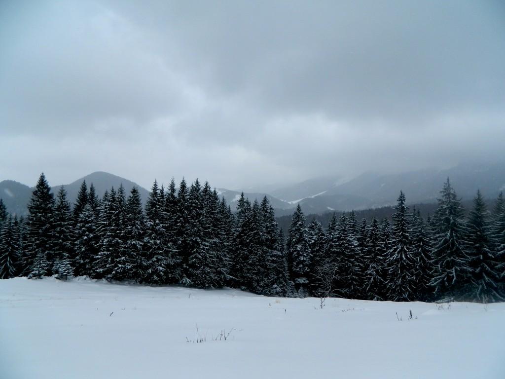 Poiana Zănoaga iarna